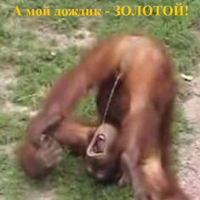 porno-ebut-volosatuyu-babu