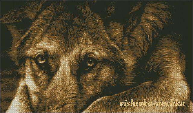 Dog eyes brown1