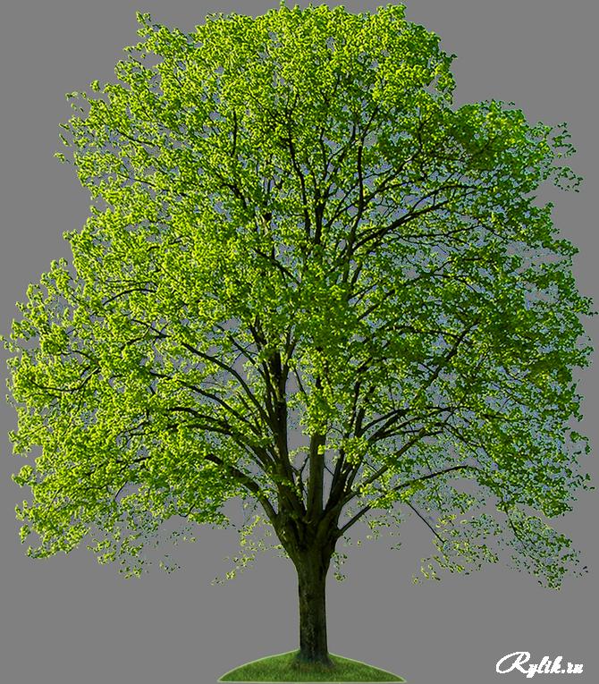 1441283344_trees202