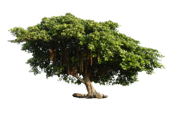 tree_png_by_ryeddh20d77luow