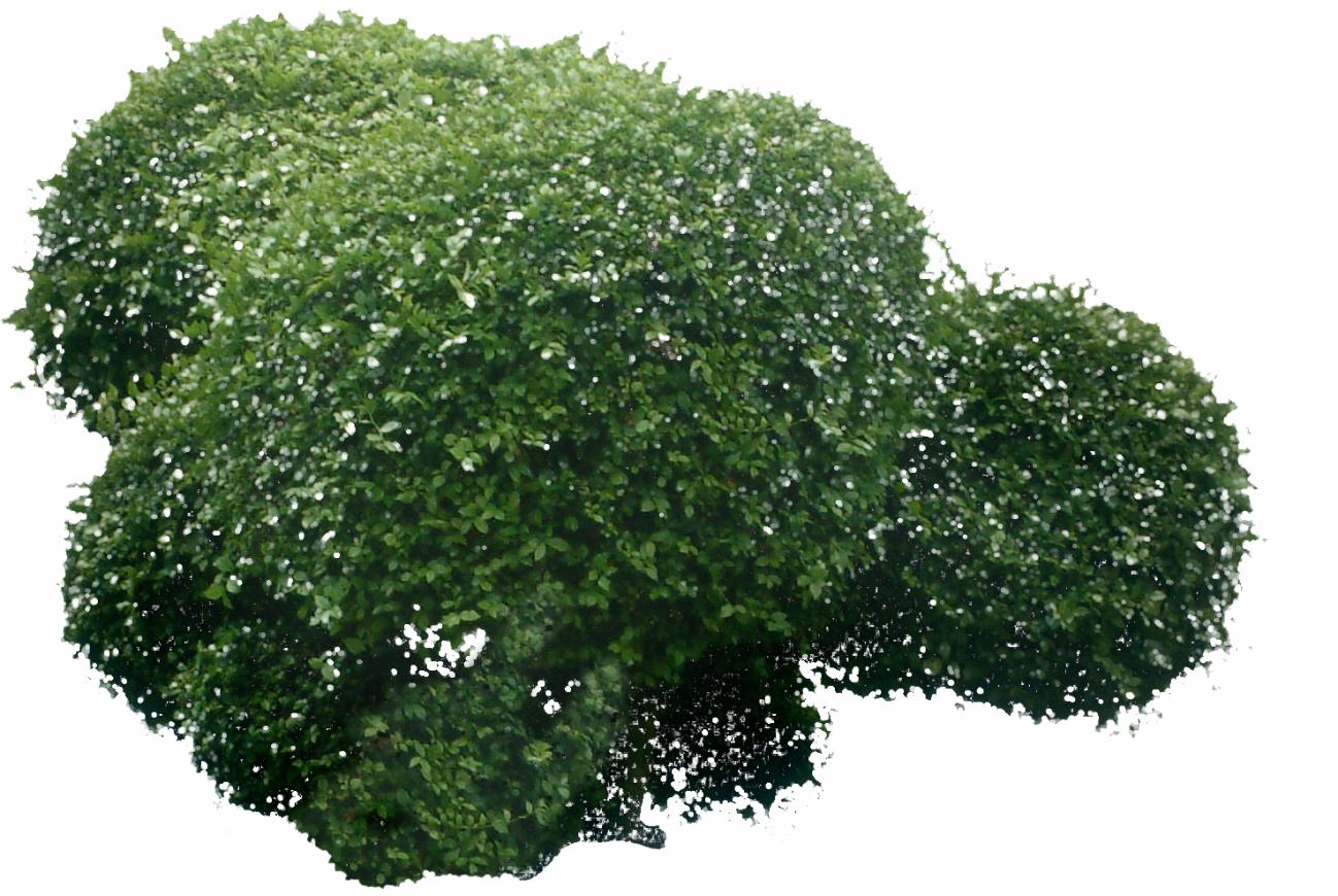 bush006