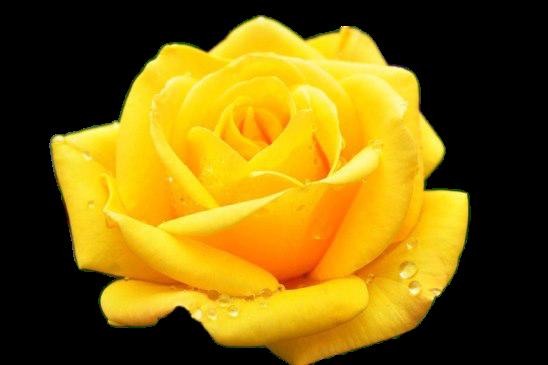 Желтая-Прозрачный фон