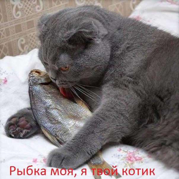 рыбка я твой котик