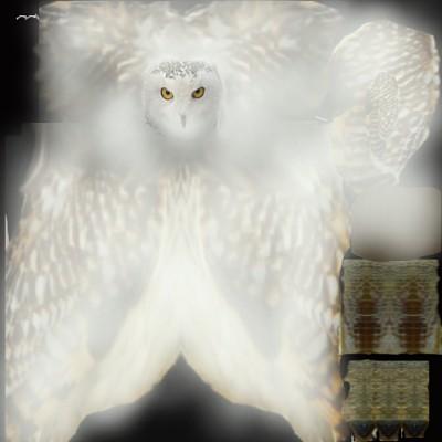 Owl_1_opt