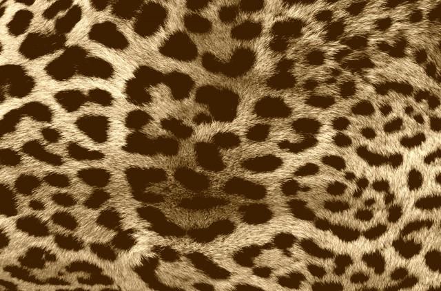 leopard_skin_fur_blotchy_textures_vintage_hd-wallpaper-287448