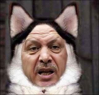 dog erdogan