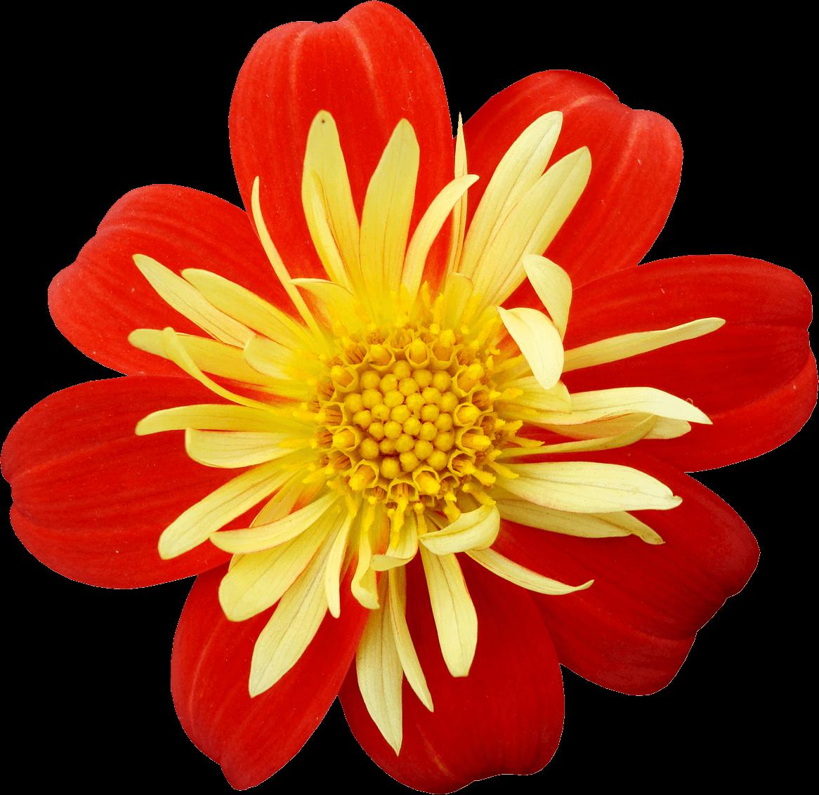 Рисунки красных цветов