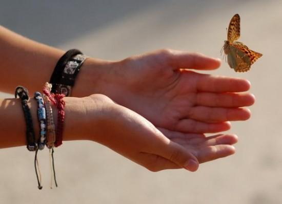 бабочка из рук