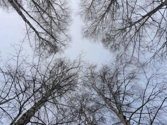 женя верхушки дерев