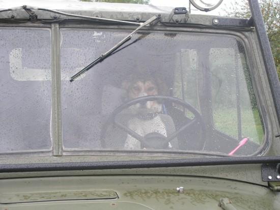 Собачка-водитель.