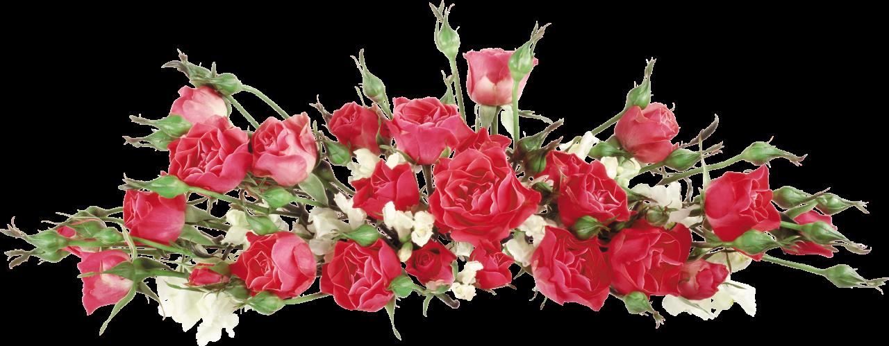 Открытки с цветами на белом фоне 90