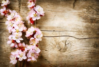 depositphotos_29985089-stock-photo-spring-blossom-over-wood-background
