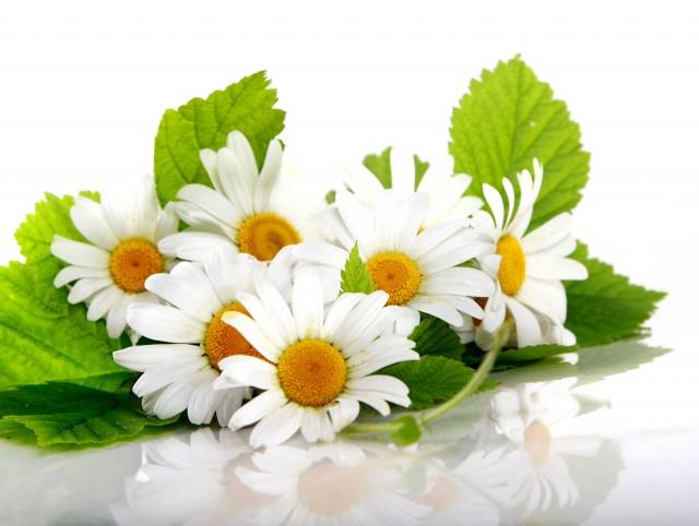 Популярные фото - Цветы , белый фон , ромашки , мед , ложка , баночки , honey - с размерами 1400 x 1050 px скачать бесплатно.