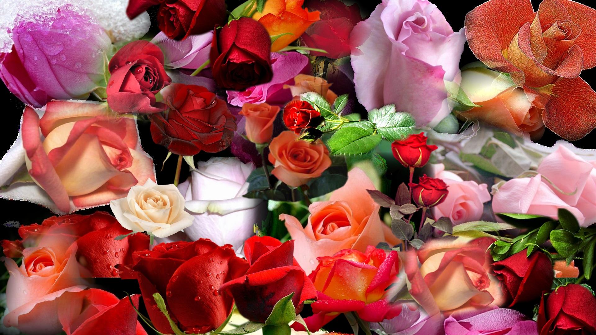 Поздравления с днём Татьяны 25 января - Поздравительные 86