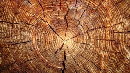 кольца на срезе дерева