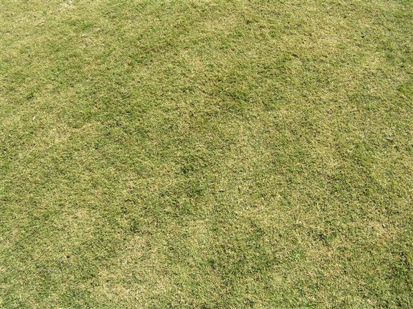 трава1