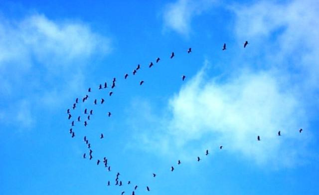 1250192631_cranes