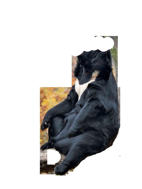 балу1