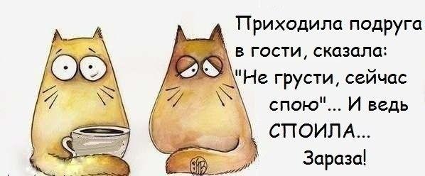 107671437_large_1385950351_frazochki21