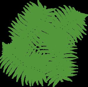 four-fern-leaves-md