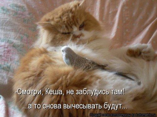 108386361_5285052_Stimka_ru_1284547752_00