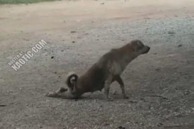 Собакен троллит