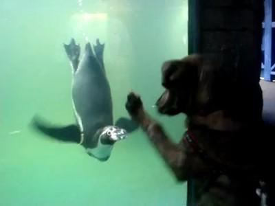 Собака с пингвином играка