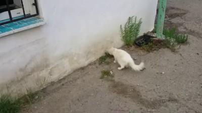 Нападение банды на кота
