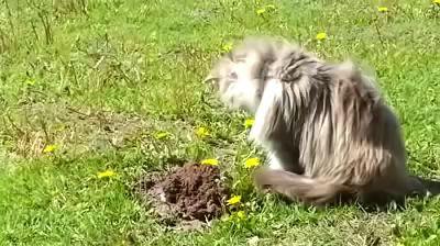Как кот крота унизил!