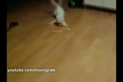 СrabCat | Крабокот