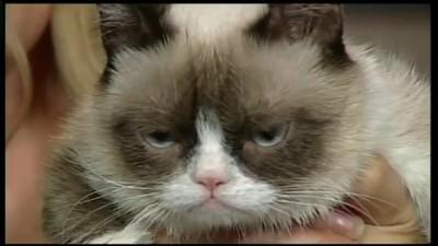 Grumpy Cat VS Karl Stefanovic