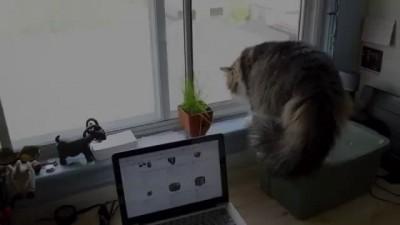 Атака злой кошки