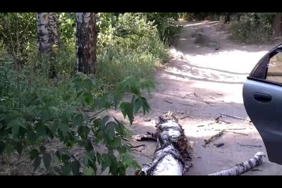 дерево упало и…  ппц