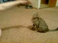 Достала кошку