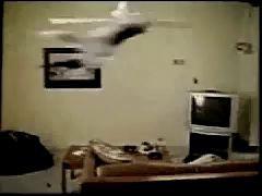 Кошка На Вентиляторе ЖЕСТЬ!