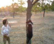собака лазит по деревьям (2)