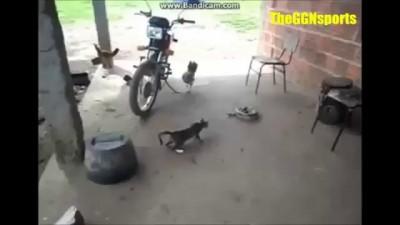Кот и змея: фантастический прыжок