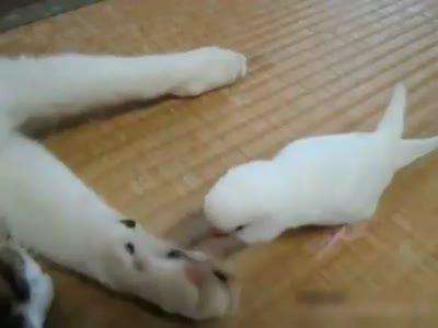 Кошка и попугай