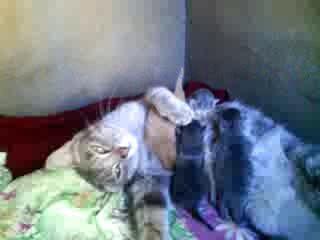 Продолжение кошкиной эпопеи