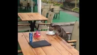 Кот пьет кофе в кафе