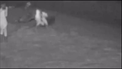 Seal Abuse Causes Beach Shutdown CCTV