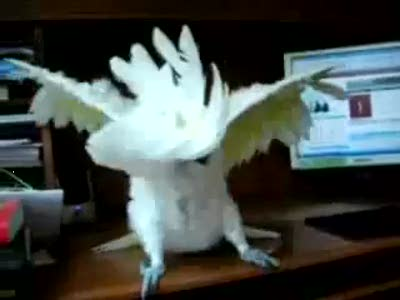 Попугай - металлист
