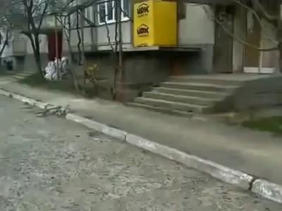 Кошка несет котенка домой