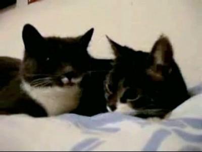 Чем занимаются кошки, когда никто не видит?