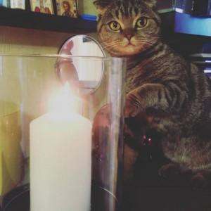Кошка и свеча