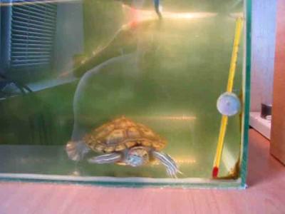 Залипающая черепаха