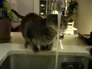 Кот с нестандартным мышлением пьет воду.avi