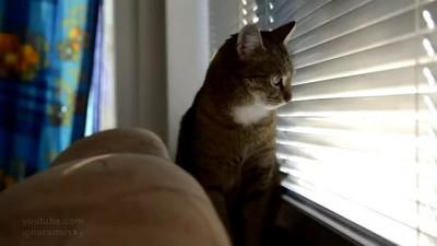 Кот подаёт сигналы
