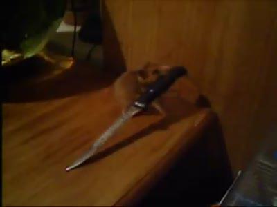 Хомяк с ножом - Hamster with a knife