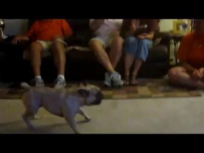 Собаки против пылесоса. Подборка Топ 7